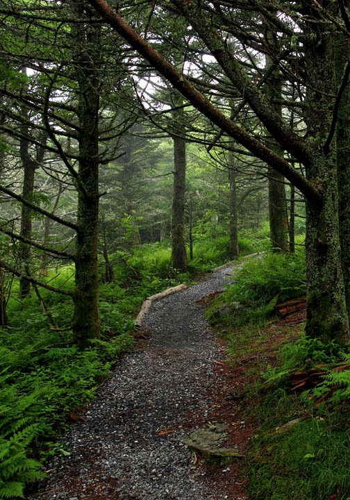 forest trail image